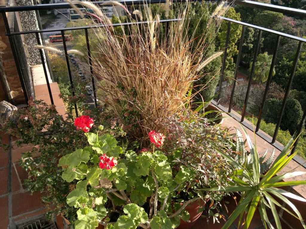 Diferentes tipos de flores related keywords diferentes for Tipos de plantas para jardin