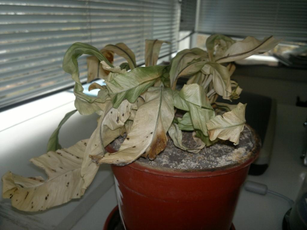 C mo recuperar una planta seca y algunos secretos del riego blogs - Recuperar jardin seco ...