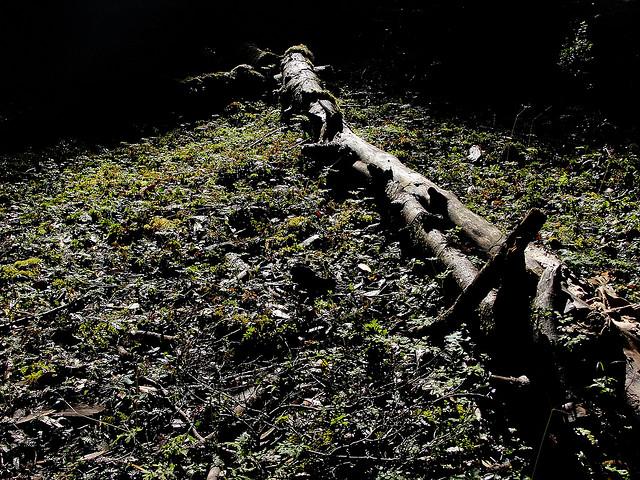 Toooodo sobre el suelo y los sustratos blogs for Tierra para jardin
