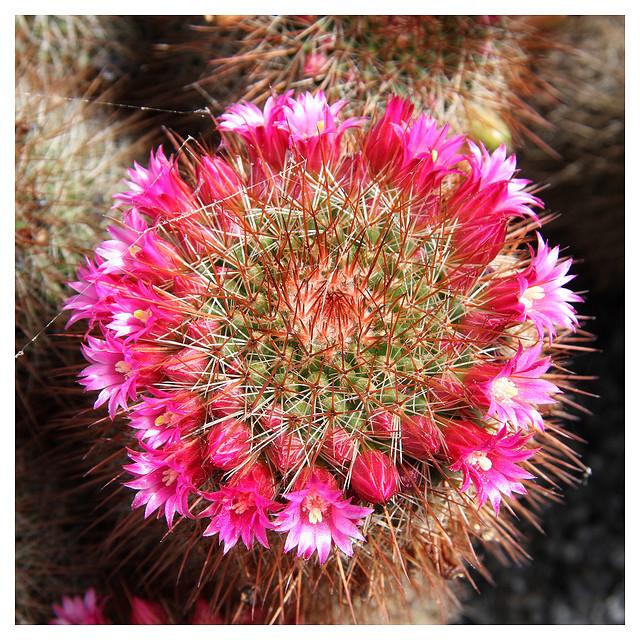 cdda8cac8 Que no se te muera el cactus! - Blogs lanacion.com