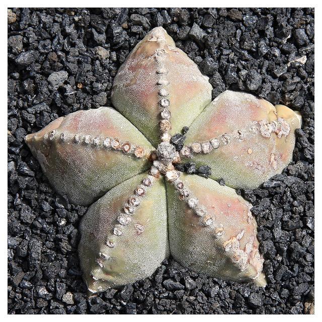 d58625fed ¡Que no se te muera el cactus! - Blogs lanacion.com