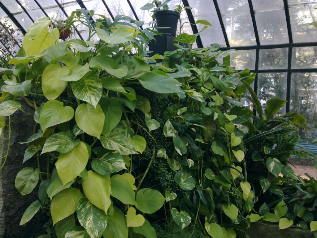 4 plantas de interior que necesitan muy poca luz blogs - Ver plantas de interior ...