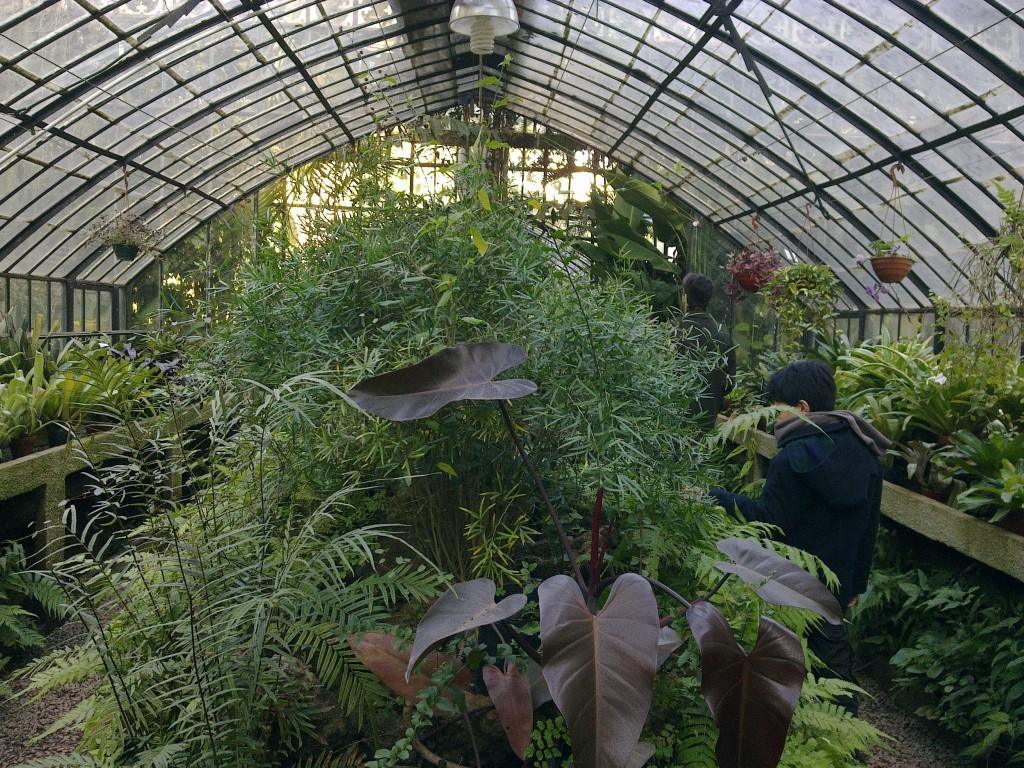 4 plantas de interior que necesitan muy poca luz blogs for Jardin de invierno en casa