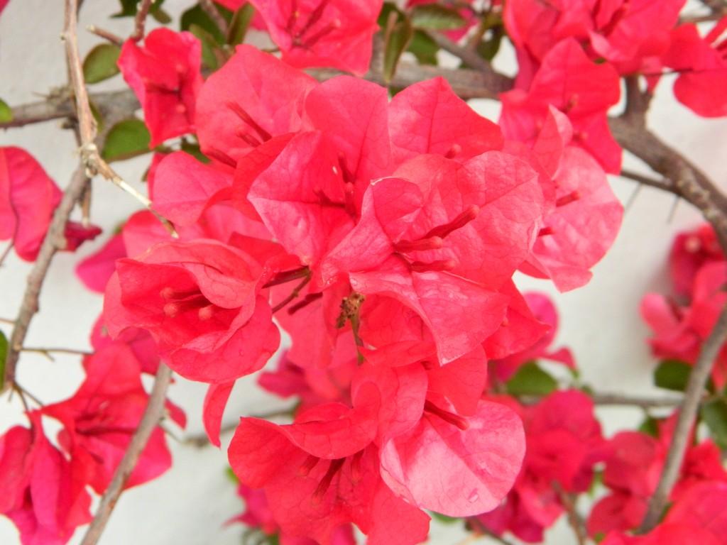 Labores de primavera en el jard n blogs for Abono para las plantas de jardin
