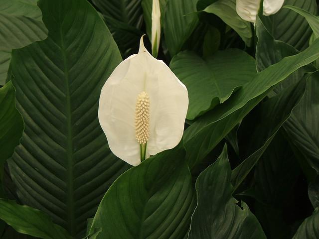 4 plantas de interior que necesitan muy poca luz blogs - Plantas de interior que necesitan poca luz ...