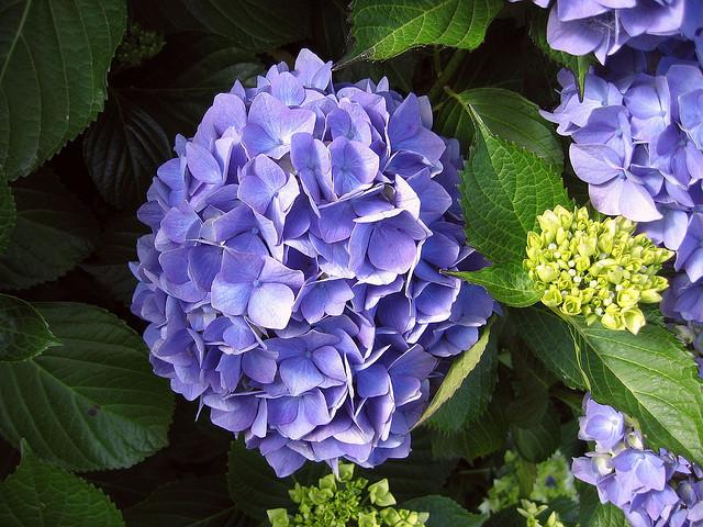 Plantas Blogs