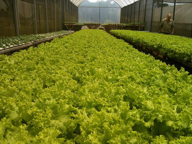 Hidroponia el cultivo del futuro blogs - Jardin hidroponico ...