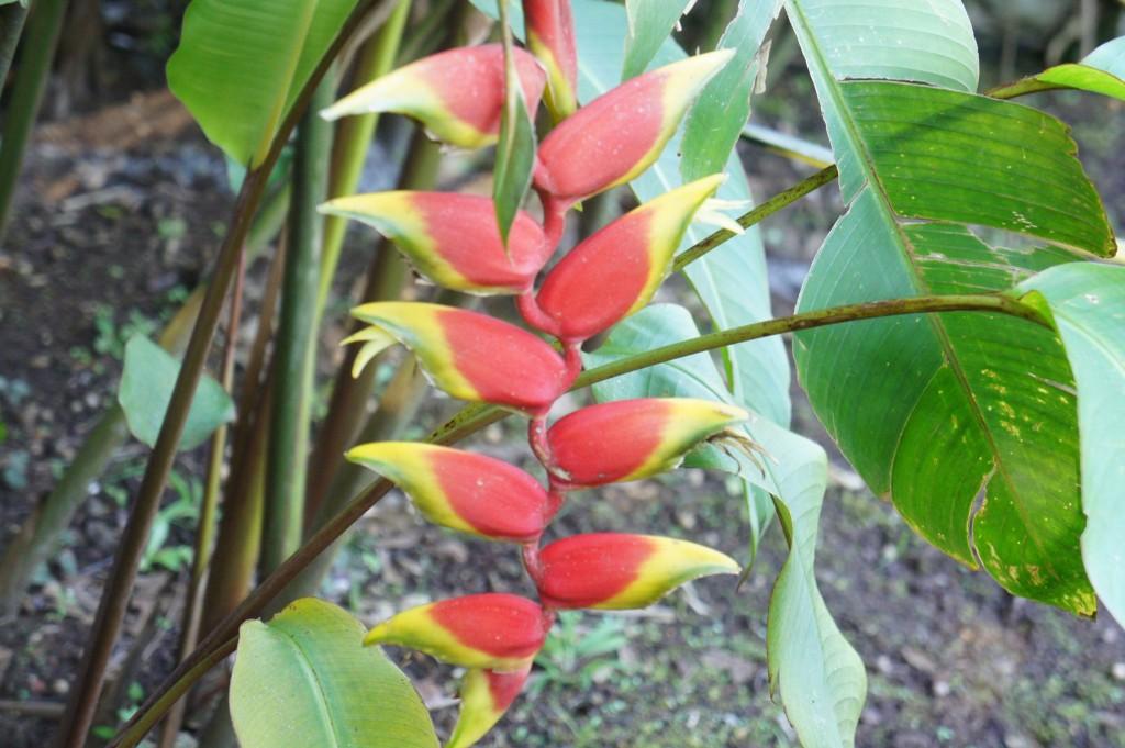 Plantas exoticas para jardins variedad rosa de la planta for Tipos de plantas para jardin