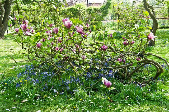 Cursos de jardiner a para todos los gustos blogs for Jardin botanico cursos