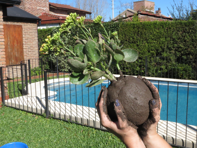 Paso a paso para armar tu kokedama blogs for Plantas que hay en un vivero