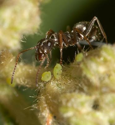 3 secretos org nicos para evitar plagas blogs for Hormigas en el jardin