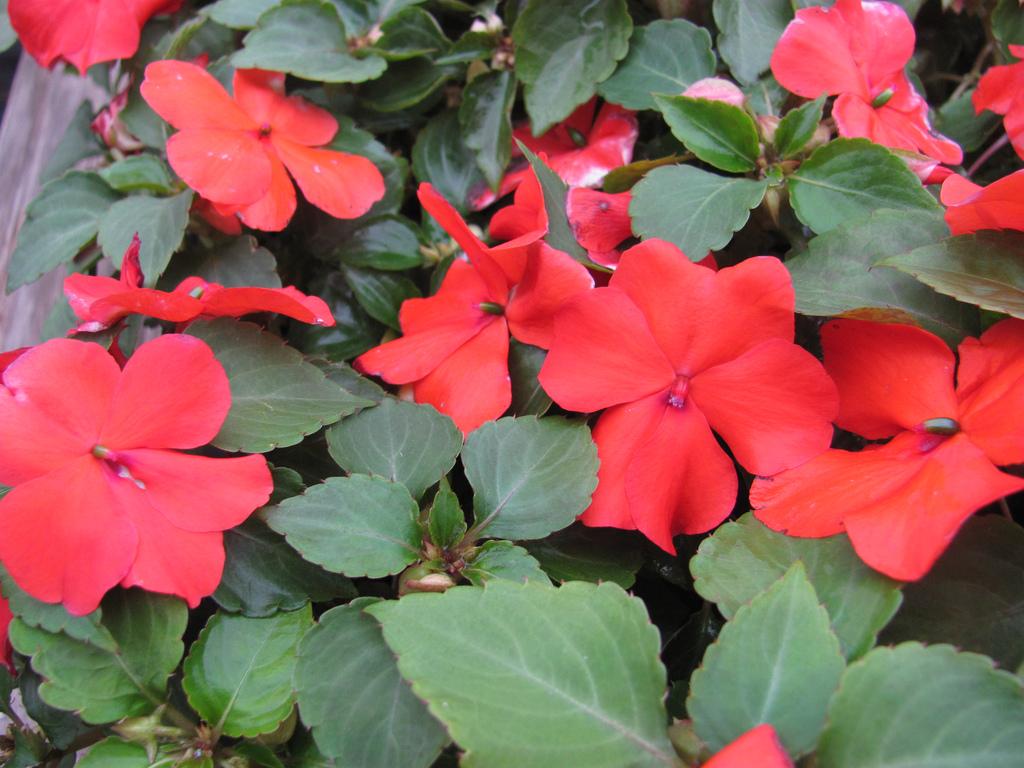 Plantas ideales para media sombra blogs - Plantas de exterior con flor ...