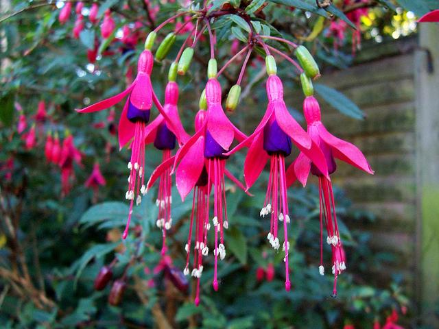 Aljaba blogs for Plantas exoticas para jardin