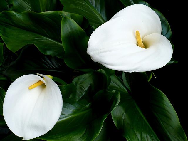 Plantas de exterior que aguanten el sol awesome flores - Plantas que aguanten el sol ...