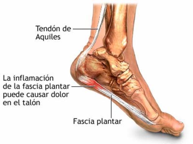 Nombres de la partes del pie - Imagui